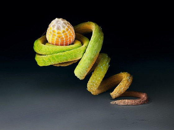 A butterfly egg on the tendril of a Passiflora plant.
