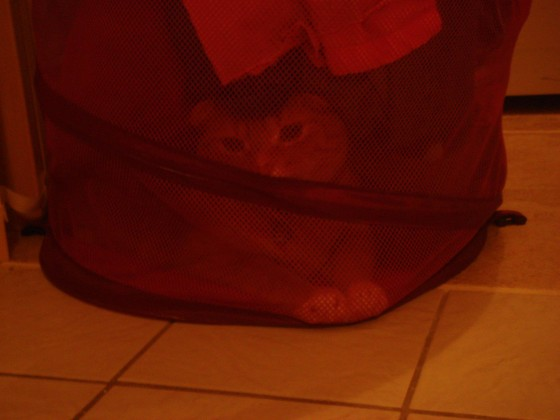 After putting my clothes in laundry hamper, I noticed that it felt heavier than usual....