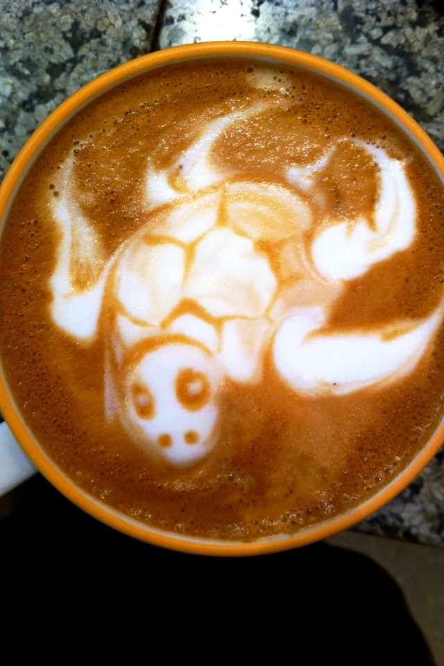 A turtle in my coffee