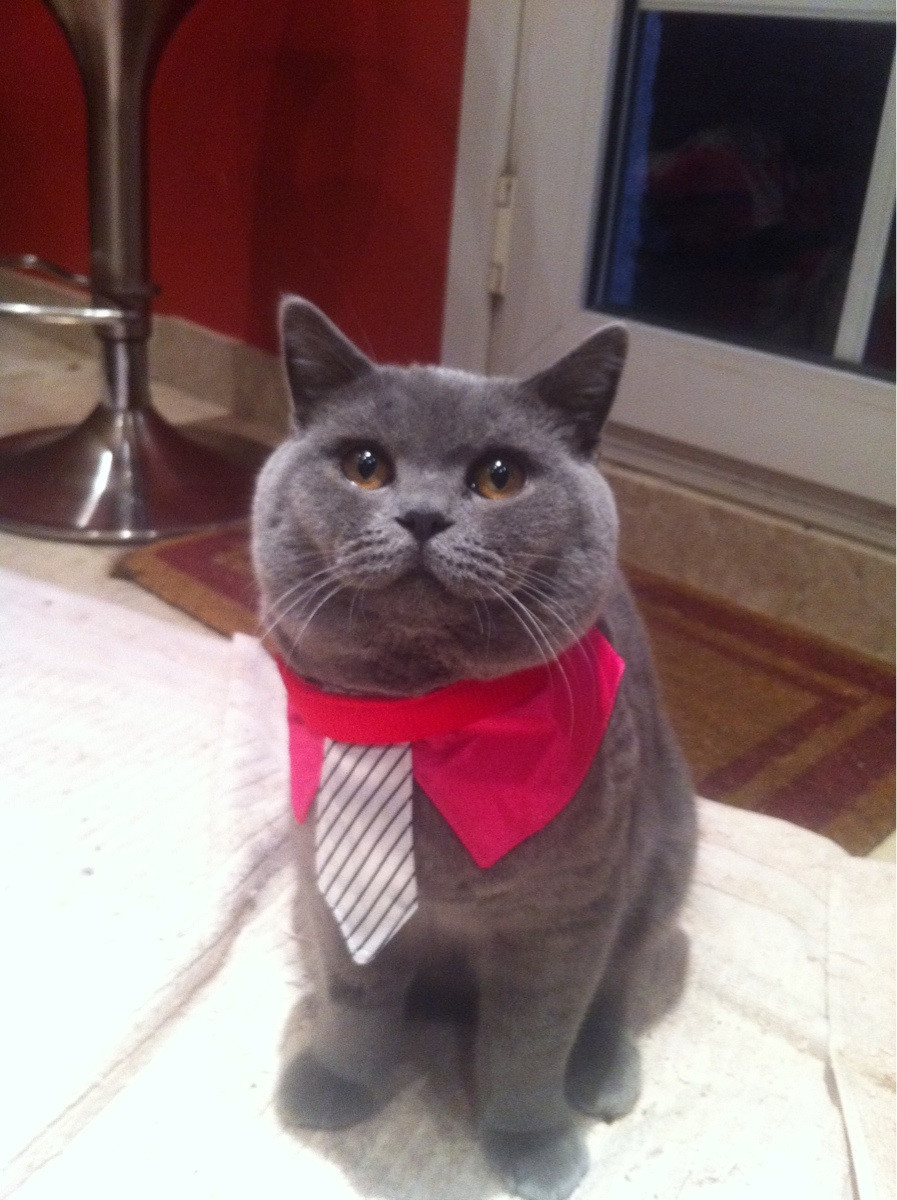 My mum bought a cat, I bought it a tie