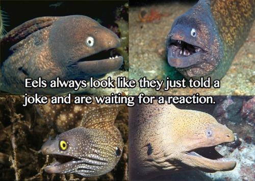 oh eels